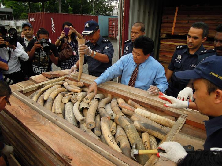 Voila! The smuggled goods are revealed! Smugglers went to great lengths to hide the 1,500 pieces of Elephant tusks they were transporting from Togo to China via Malaysia.