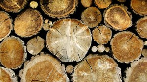 China is the biggest recipient of Mozambique timber