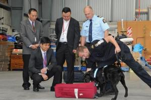 Detector Dog Rajax demonstrates his cash-sniffing abilities during training at a NZ Customs facility