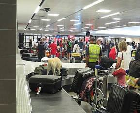 Luggage search with Narcotics Detector Dog at KSIA