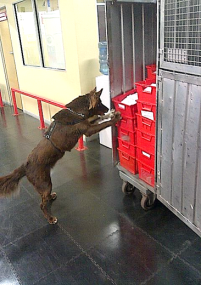 Mail searches with Endangered Species Detector Dog