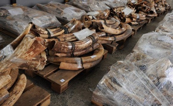 Campaigners say rising demand in Asia is fuelling the poaching of elephants in Africa and the smuggling of ivory