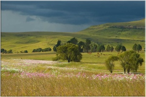 Harrismith, Free State, South Africa
