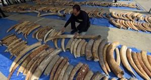 Vietnam Custom ivory seizure