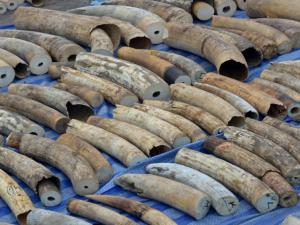 Vietnam Ivory Seizure