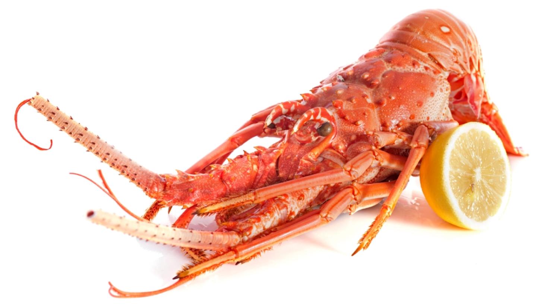 rock-lobster3