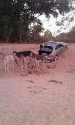 News24 smuggled vehicles 2