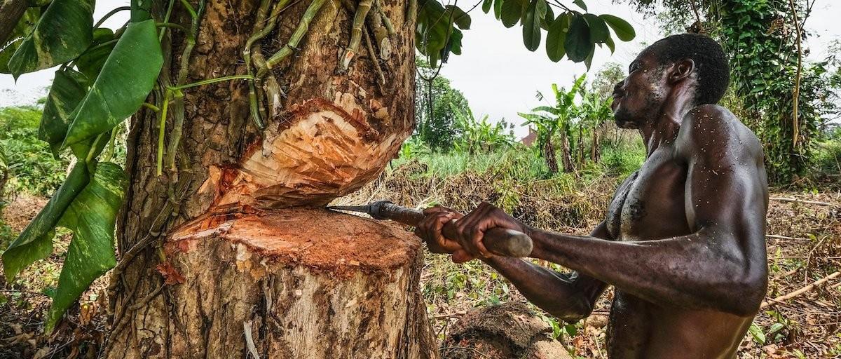 Logging in Africa