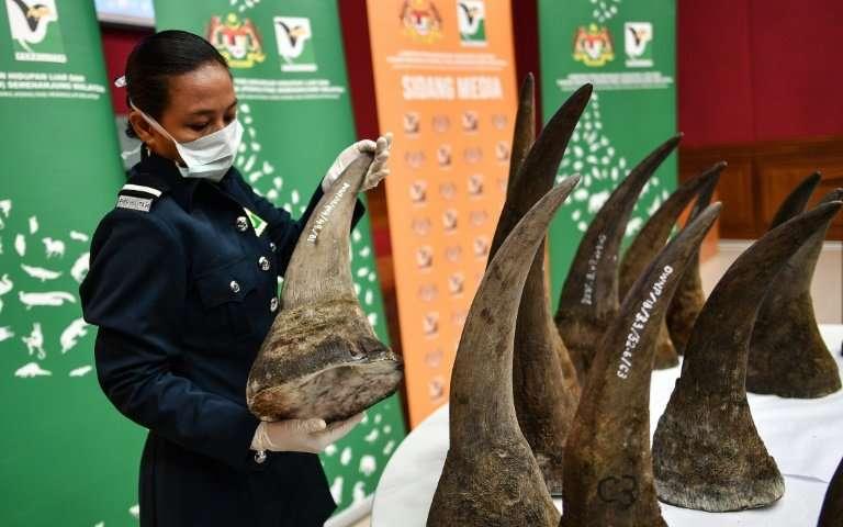 Malaysia Rhino Horn Bust